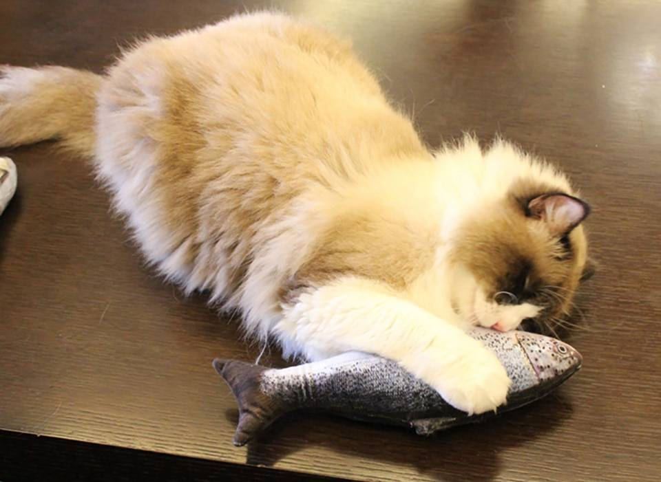 3D Catnip Fish Toy
