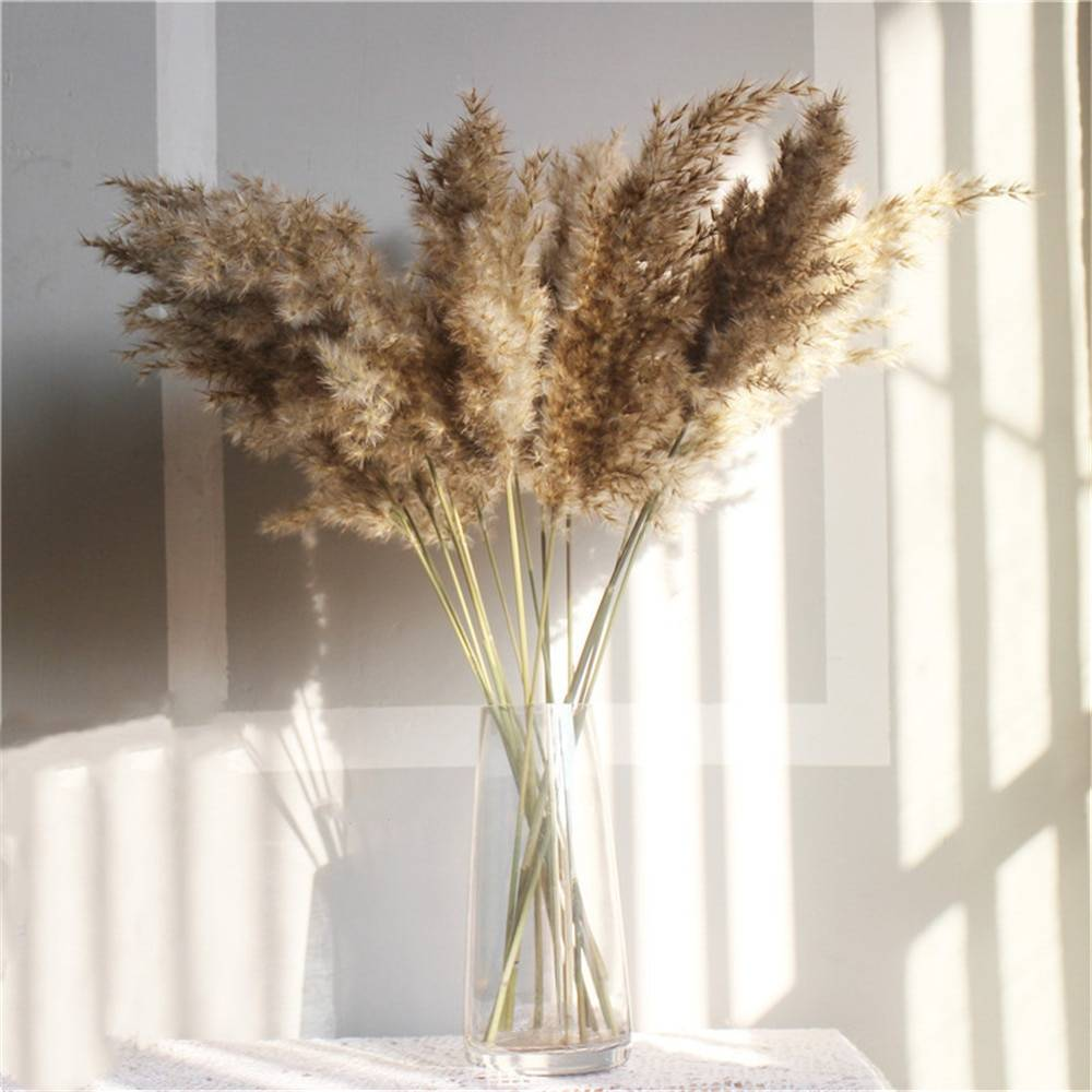 Set of Natural Dried Pampas Grass Bunches