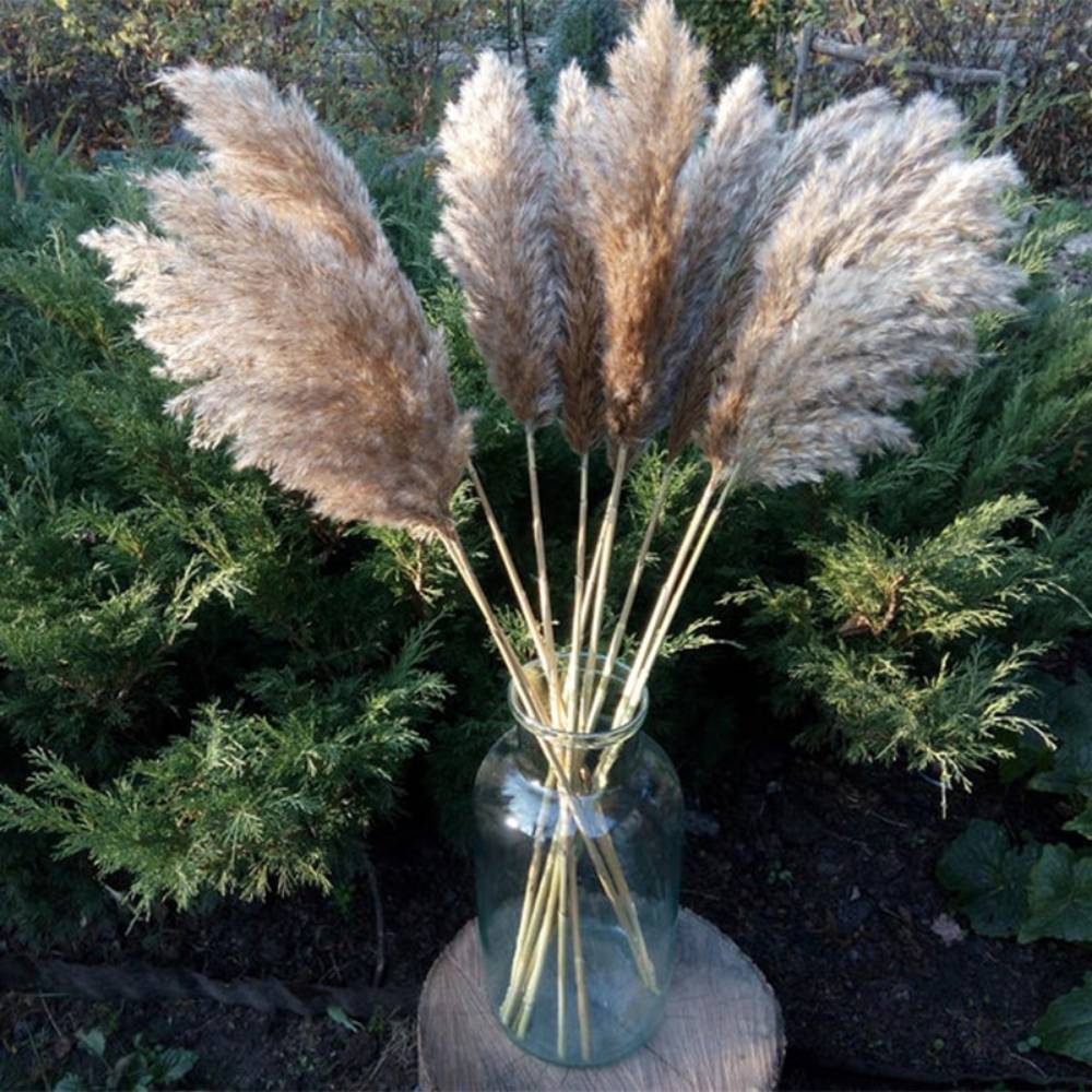 Set of Natural Dried Pampas Grass Bunches Artificial & Dried Flowers Home & Garden Type : 30 Pcs Set|8 Pcs Set|10 Pcs Set 1|10 Pcs Set 2|20 Pcs Set